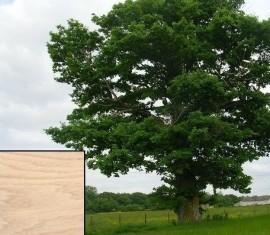 Sainteny Menuiseries, le chêne